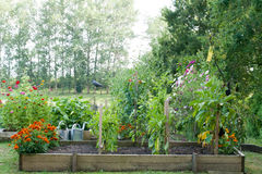 The vegetable garden. And flower-bed Stock Photos