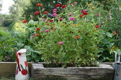 The vegetable garden. And flower-bed Royalty Free Stock Images