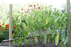 The vegetable garden. And flower-bed Royalty Free Stock Photo