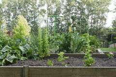 The vegetable garden. And flower-bed Stock Photo