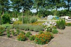 Vegetable garden with flowers in summer Stock Photos