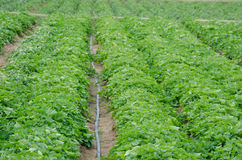 Vegetable garden Stock Photos
