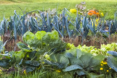 Vegetable garden, formal garden, pumpkin, leek, grass, orange, g. Closeup into a french formal garden in autumn with Brussels sprouts, lettuces, leeks and Royalty Free Stock Photography
