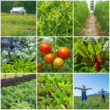 Vegetable garden Stock Image