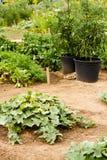 Vegetable garden Royalty Free Stock Photo