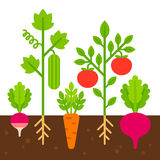 Vegetable garden illustration Stock Image