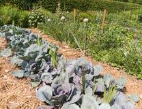 Vegetable Garden Stock Photography