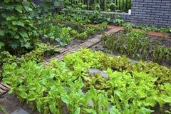 A vegetable garden. royalty free stock photo