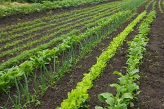A vegetable garden in late spring Royalty Free Stock Photography