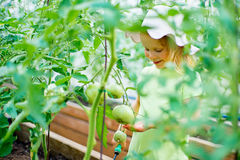 Vegetable garden - little girl taking care of the plants in the Stock Photos