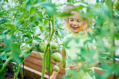 Vegetable garden - little girl taking care of the plants in the Royalty Free Stock Photos