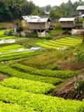 Vegetable garden. Local Laos vegetable garden in daytime Stock Photo