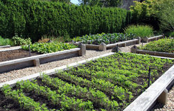 Vegetable garden. Neatly organized raised vegetable garden Stock Images