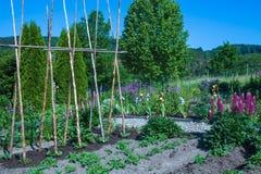 Vegetable garden Stock Image