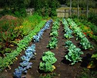 Vegetable Garden at Old World Wisconsin Royalty Free Stock Photo
