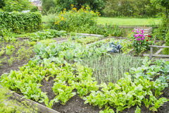 Vegetable Garden Patch Stock Photo
