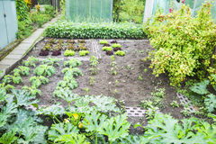Vegetable Garden Patch Royalty Free Stock Photo