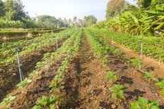 The vegetable garden Stock Photo
