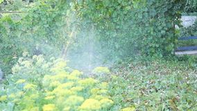 Watering the garden on the site. Spray water for watering plants on the farm, garden. Fountain of water for irrigation of agricult. Watering the garden on the stock footage