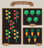 Vegetable garden planner flat design.Beds with cabbage, carrots, Royalty Free Stock Photography