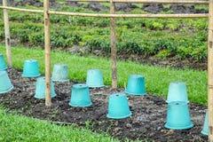 Vegetable garden plots Stock Image