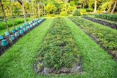 Vegetable garden plots Stock Photography
