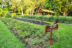 Vegetable garden plots Royalty Free Stock Images
