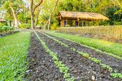Vegetable garden plots Royalty Free Stock Photography