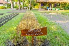 Vegetable garden plots Royalty Free Stock Photo