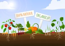 Vegetable garden poster vector illustration