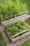 Vegetable garden in raised boxes. Backyard vegetable garden in wooden raised beds or boxes Stock Photography