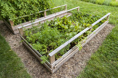Vegetable garden in raised boxes. Backyard vegetable garden in wooden raised beds or boxes Royalty Free Stock Images