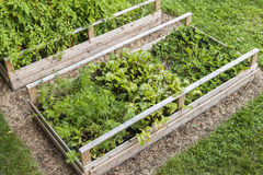 Vegetable garden in raised boxes. Backyard vegetable garden in wooden raised beds or boxes Royalty Free Stock Photos