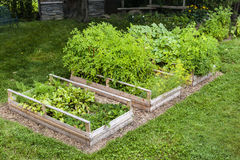 Vegetable garden in raised boxes. Three raised garden beds growing fresh vegetables in a backyard Stock Images
