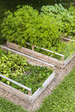 Vegetable garden in raised boxes. Three raised garden beds growing fresh vegetables in a backyard Stock Photography