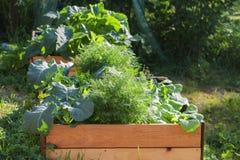 Vegetable garden in raised wooden beds, rural countryside scene. Selected focus Stock Photo