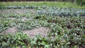 Vegetable garden recorded from above stock video footage
