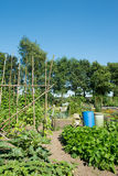 Vegetable garden in summer Royalty Free Stock Photos