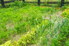 Vegetable garden in summer Stock Photos