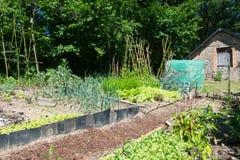 Vegetable garden in sunshine Royalty Free Stock Image