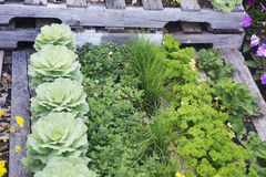 Vegetable Garden. With a variety of vegetables Royalty Free Stock Photos