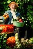 Vegetable gardening Royalty Free Stock Photo
