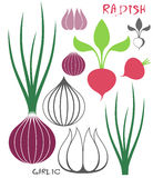 Vegetable. Garlic. Onion. Radish Royalty Free Stock Photos