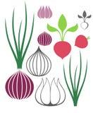 Vegetable. Garlic. Onion. Radish Stock Images