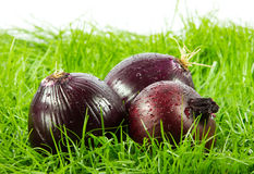 Vegetable on green gras on  white  background food Royalty Free Stock Image
