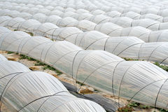 Vegetable greenhouse royalty free stock photography