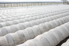 Vegetable greenhouse. Plastic greenhouse for farming of vegetables Stock Photography