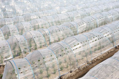Vegetable greenhouse Royalty Free Stock Photos