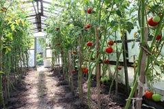 Vegetable greenhouse Stock Photos