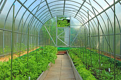 Vegetable greenhouse Stock Images